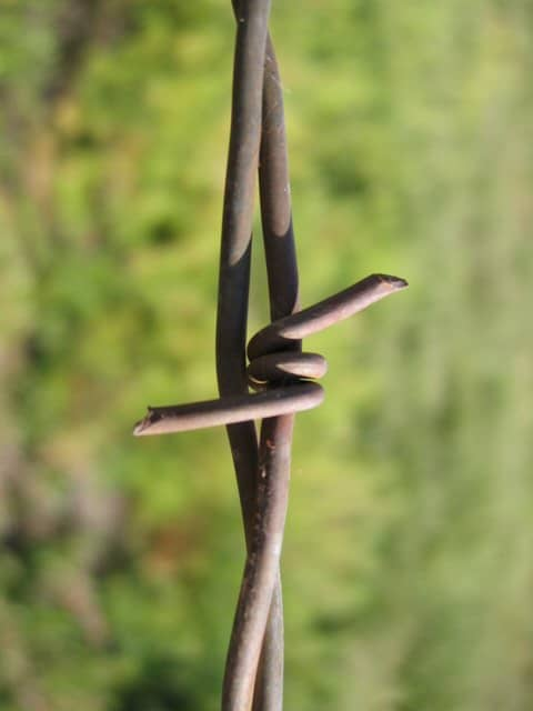 Barbed-Wire-5